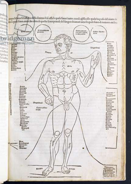 The Male Anatomy, from 'Fascilulus Medicinae' by Johannes de Ketham (d.c.1490) 15th-16th century (woodcut)