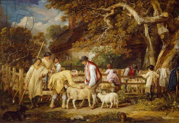 Sheep Salving, 1828 (oil on canvas)