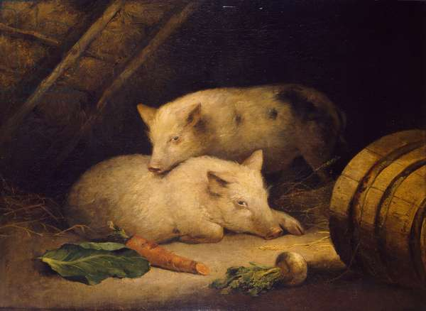 Pigs, 1775-1800 (oil on canvas)