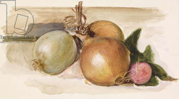 Still-Life - Study of Onions, 1871-75 (w/c with white bodycolour on paper)