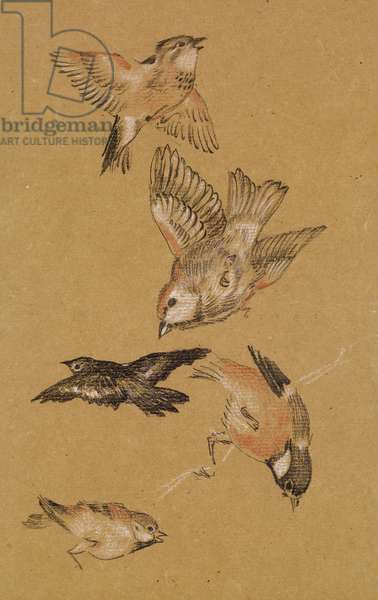 Love leading the Pilgrim - Study of Birds: Finches, 1897 (coloured chalk on paper)