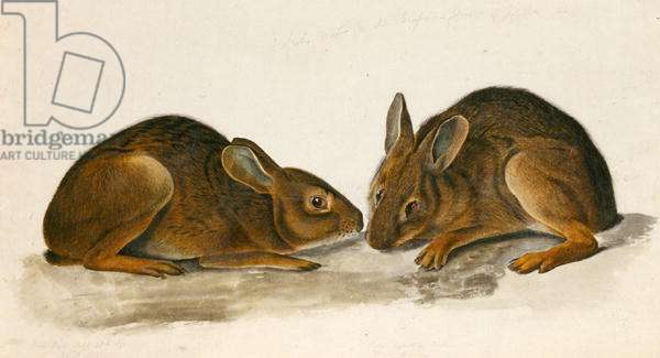 Marsh Hares (w/c on paper)