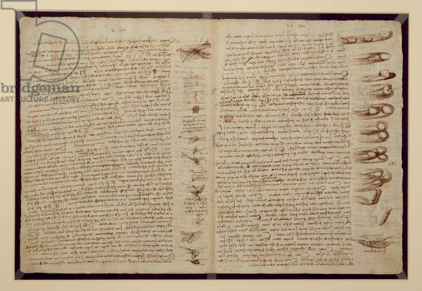 A page from the Codex Leicester, 1508-12 (sepia ink on linen paper)