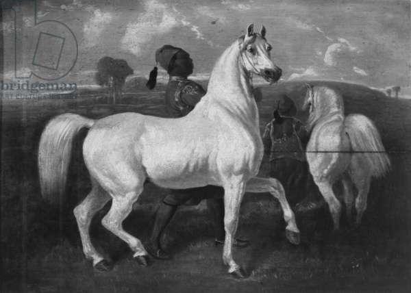 Arabian Horses, 19th century (oil on panel)