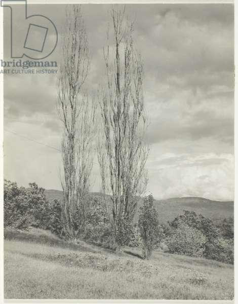 Poplars Lake George, 1935 (gelatin silver print)