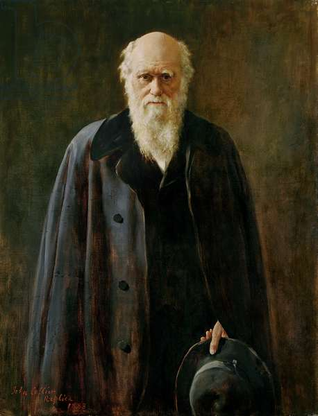 Portrait of Charles Darwin (1809-1882) 1883 (oil on canvas)