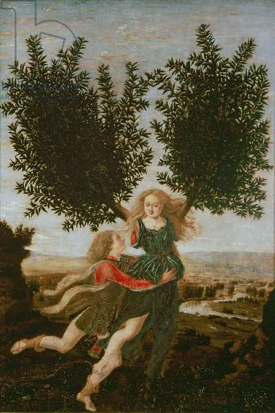 Daphne and Apollo, c.1470-80 (oil on panel)