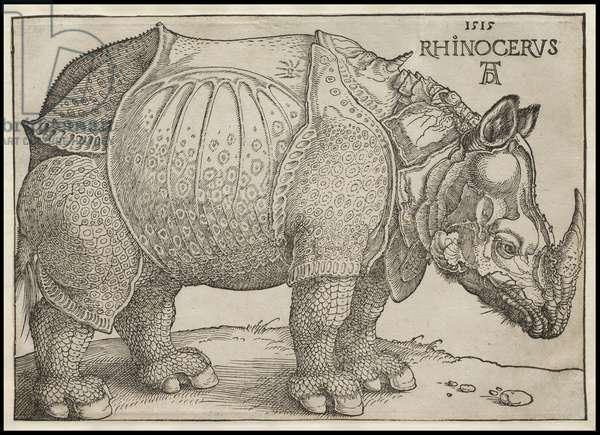 The Rhinoceros, 1515 (woodcut)