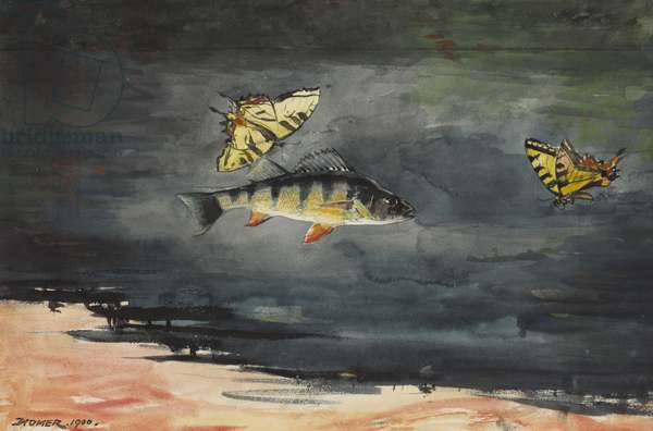 Fish and Butterflies, 1900 (w/c over graphite on cream wove paper)