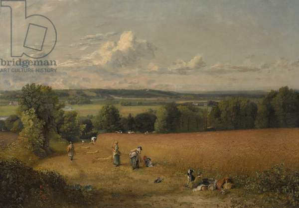 The Wheat Field, 1816 (oil on canvas)