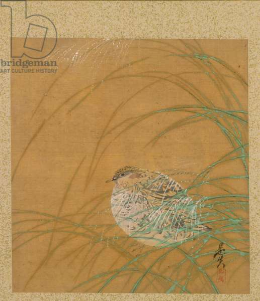 Quail in Grass from Album of Painting, 1847 (ink, colour, and gold on silk)