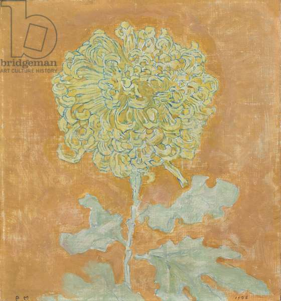 Chrysanthemum, 1906-1942 (oil on canvas)