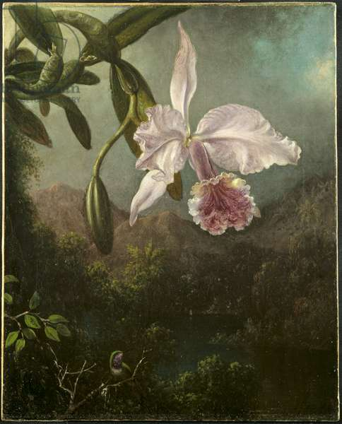 Orchid Blossoms, 1873 (oil on canvas)