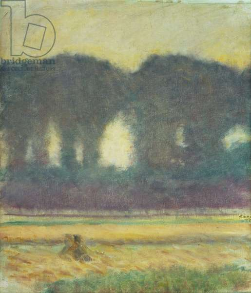 Fir Trees and a Cornfield, 1908 (oil on canvas)