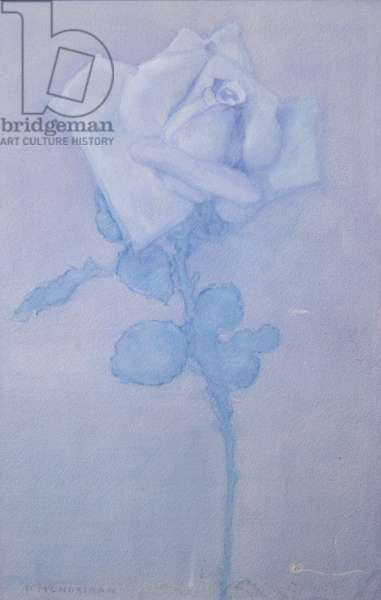 White rose, 1920–1925 (w/c and pastel)