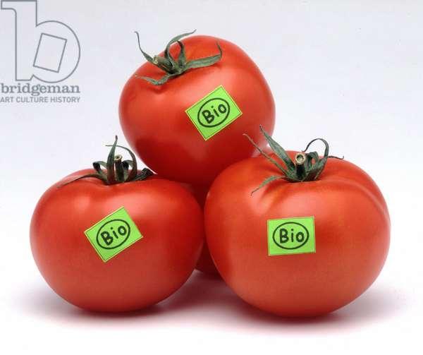 Still life of organic tomatoes. (organic tomatoes)