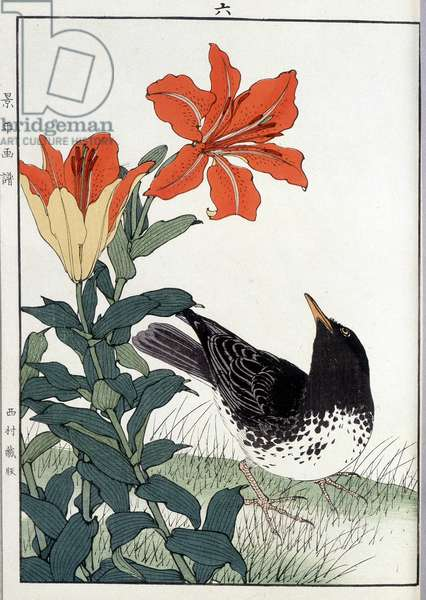 Blackbird and lily flowers - Japanese print