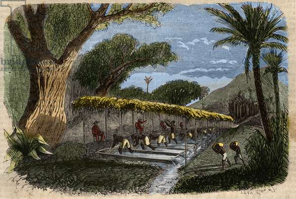 """Diamond mining: washing diamond clay by slaves in Brazil. Engraving from 1857 in """""""" Le Musee Des Sciences"""""""""""