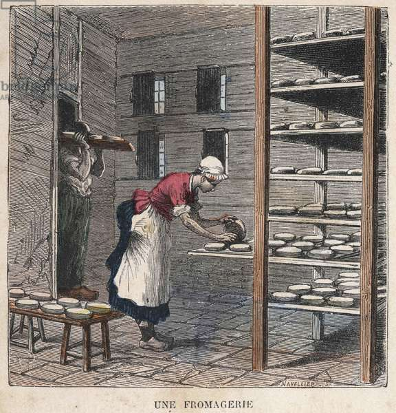 A cheese factory. 19th century illustration. Bianchetti collection.