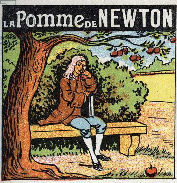 Gravitation: Newton's apple. Isaac Newton (1642-1727) observes an apple falling from an apple tree and discovers the laws of earth gravity (gravite). Anonymous illustration from 1925. Private collection.