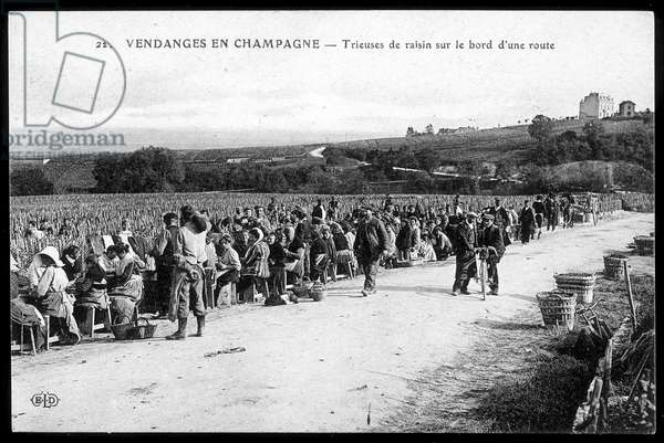 Harvest in Champagne: grape sorters on the edge of a road - postcard, deb. 20th century