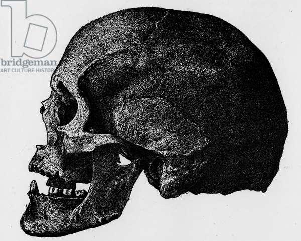 """Crane d'Aino de profil (norma verticalis) - in """""""" Fossil men and wild men. Etudes d'anthropologie"""", 1884, by Armand de QUATREFAGES DE BREAU, naturalist and anthropologist francais"""