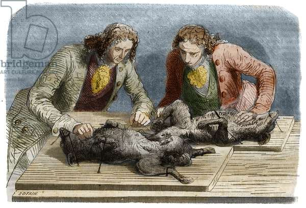 Medical experience: blood transfusion performed on two dogs in Paris in 1667. Engraving from 1857 from a drawing by Claude Perrault.