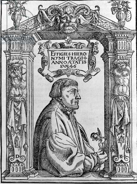Portrait of Jerome Bock (Hieronymus Bock) (1498-1554), botanist and doctor of the 16th century