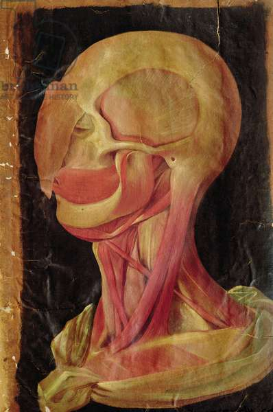 Anatomical drawing of the human head (gouache on paper)