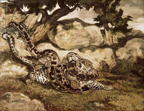 A Python Killing a Tiger (w/c & gouache on paper)