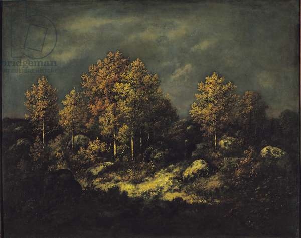 The Jean de Paris Heights in the Forest of Fontainebleau, 1867 (oil on canvas)