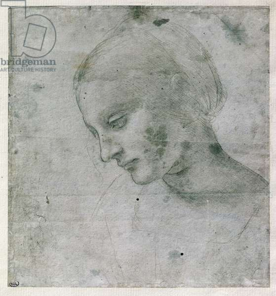 Head of a Young Woman or Head of the Virgin, c.1490 (silverpoint on paper)