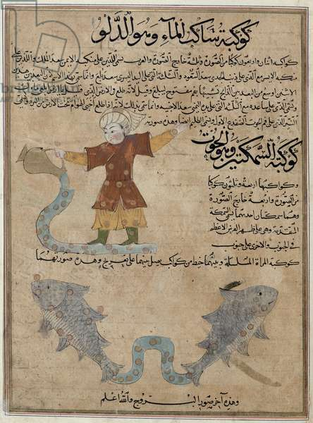 Ms E-7 fol.25a  Aquarius and Pisces, from 'The Wonders of the Creation and the Curiosities of Existence' by Zakariya'ibn Muhammed al-Qazwini (gouache on paper)