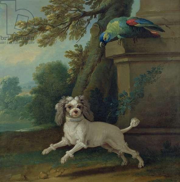 Zaza, the dog, c.1730 (oil on canvas)
