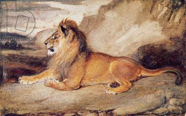 Lion Resting (w/c & gouache on paper)