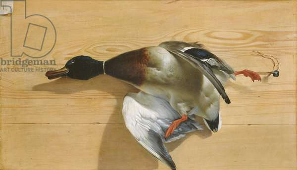 A duck on a pine board, 1753 (oil on canvas)