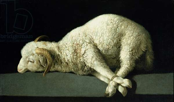 Agnus Dei, c.1635-40 (oil on canvas)