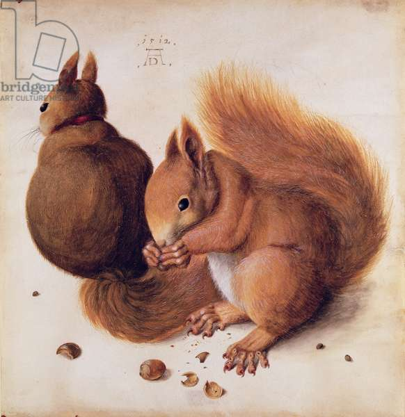 Squirrels, 1512 (tempera on parchment)