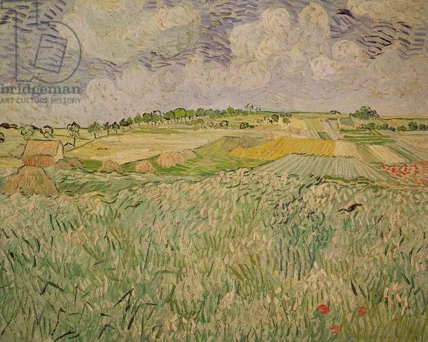 The Plain at Auvers, 1890 (oil on canvas)