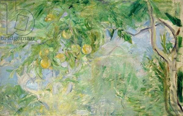 Orange Tree Branches, 1889 (oil on canvas)