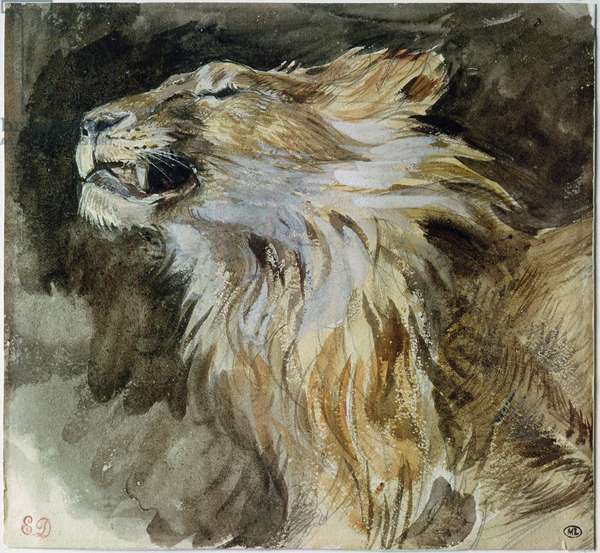 The Head of a Lion (watercolour on paper)