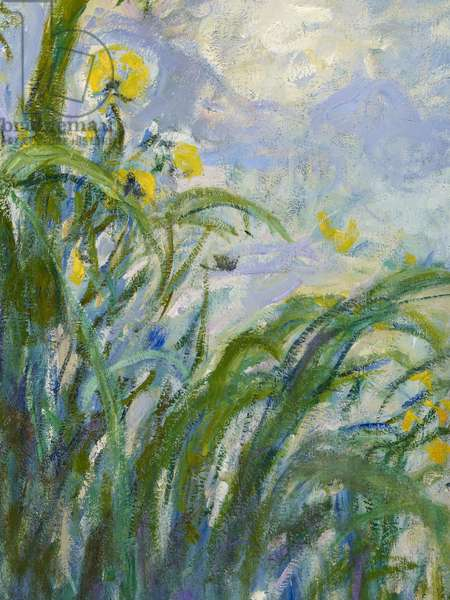 The Yellow Iris (detail of 154652) (oil on canvas)