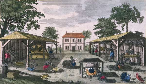 The Colonial Household, illustration from 'Histoire Generale des Antilles Habitees par les Francois Vol. 2' by Jean Baptiste Du Tertre (1610-1687) published 1667 (coloured engraving)  (see also 177261)