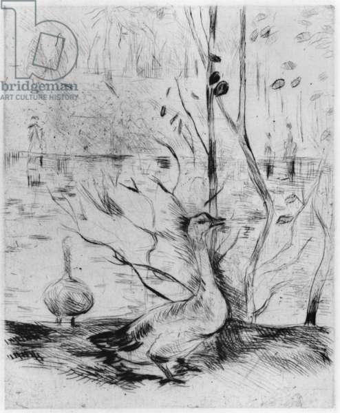 Goose, 1889 (drypoint) (b/w photo)