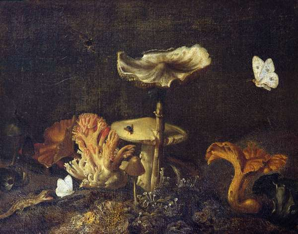 Still Life with Mushrooms and Butterflies (oil on canvas)