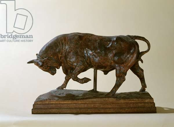 Small Bull (plaster)