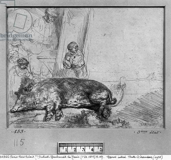 The Sow, 1643 (etching) (b/w photo)