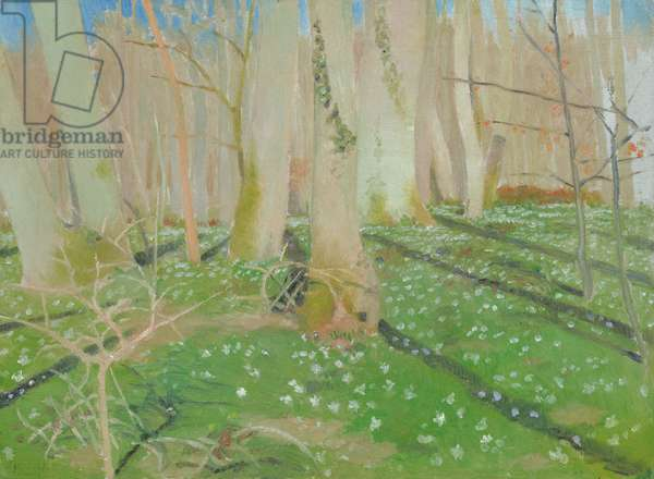 Forest with anemonies, 1889 (oil on card)