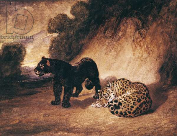 Two Jaguars from Peru (w/c on paper)