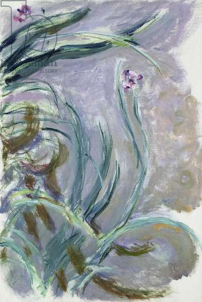 Iris, 1924-25 (oil on canvas)